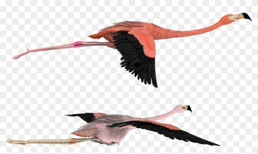 Draw Flamingo Flying Drawing Free Transparent Png Clipart Images