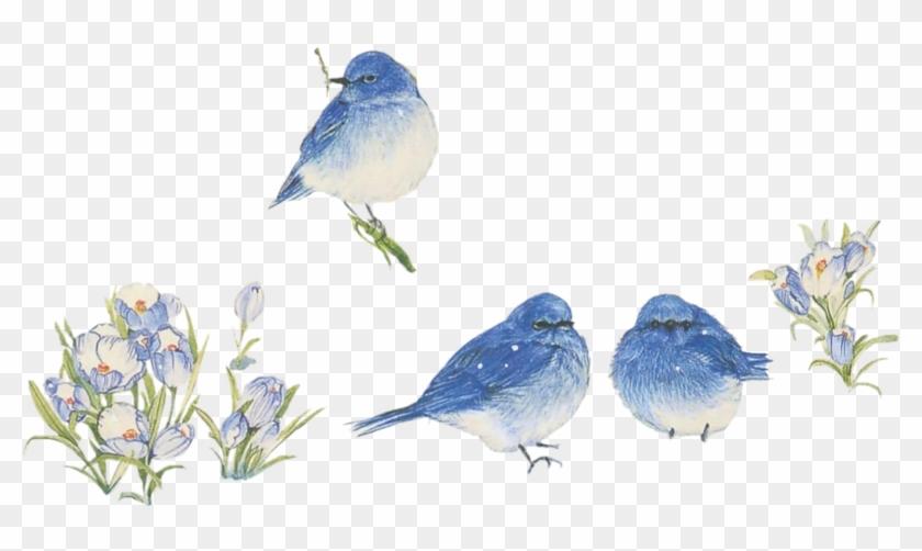 Noel 009 Dedinelle Noel Animaux 046 Dedinelle Noel - Mountain Bluebird #329250