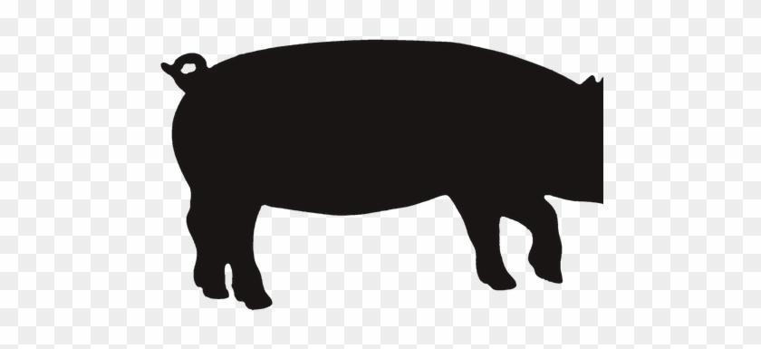 Pig - Bacon #329527