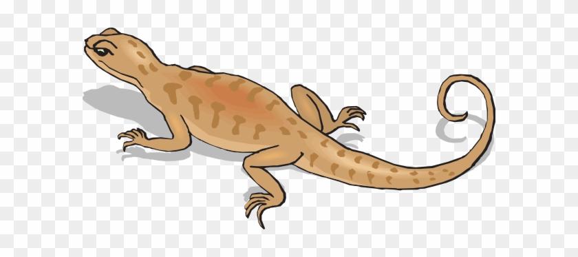 Salamander Clipart Reptile - Kangaroo Conservation Center #329572