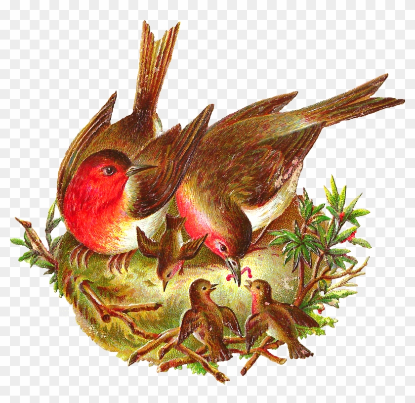 This Is An Amazing Bird Digital Graphic I Created From - Bird With Nest Png #329764