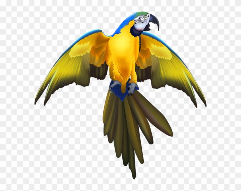 Beautiful Birds - Pirate Parrot Golf Balls #329782