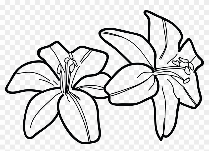 Tiger Lily Flower Drawing Water Lilies Tattoos Designs Draw A Tiger Lily Free Transparent Png Clipart Images Download