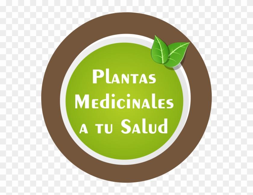 Fotos Propias, Y Otras Desde Pinterest Y Flickr - Medicinal Plants #330750