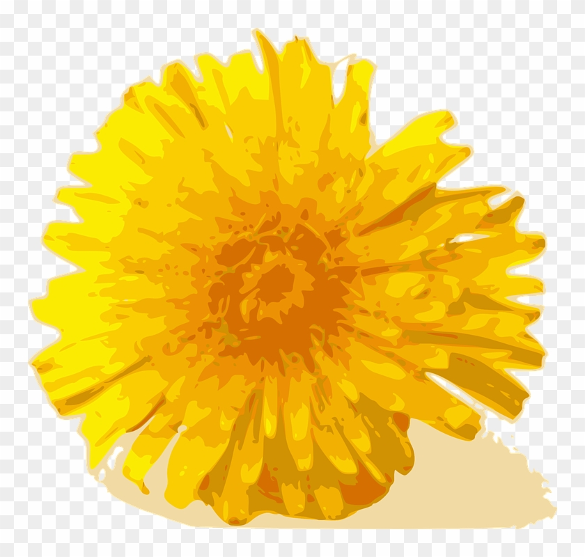 Dandelion Cliparts 7, - Yellow Chrysanthemum Flower Png #331136