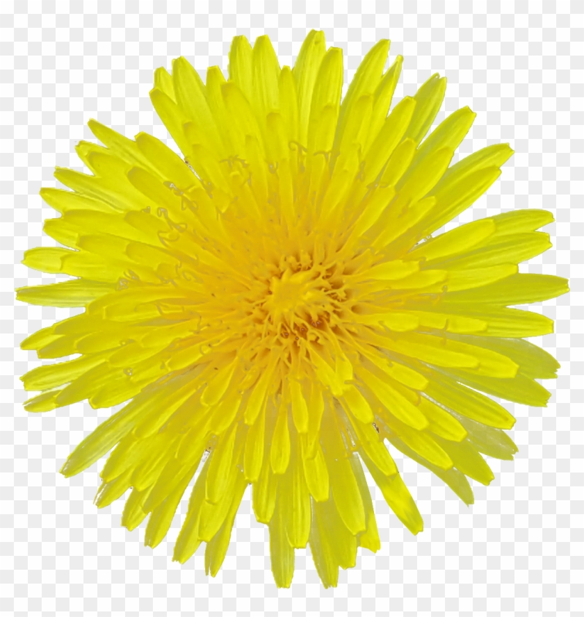 Yellow Flower White Background #331141