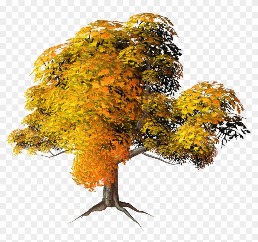 Has Found 20 Trees With Transparent Background - Fall Trees Png #331248