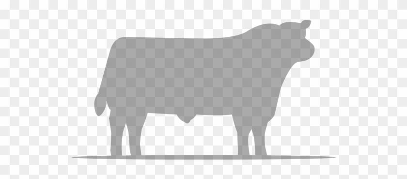 Cow - Cattle #332886