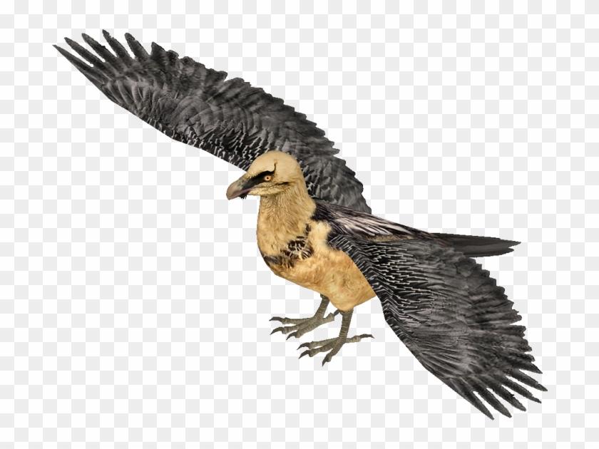 Lammergeier Hendrix Bearded Vulture Free Transparent Png Clipart