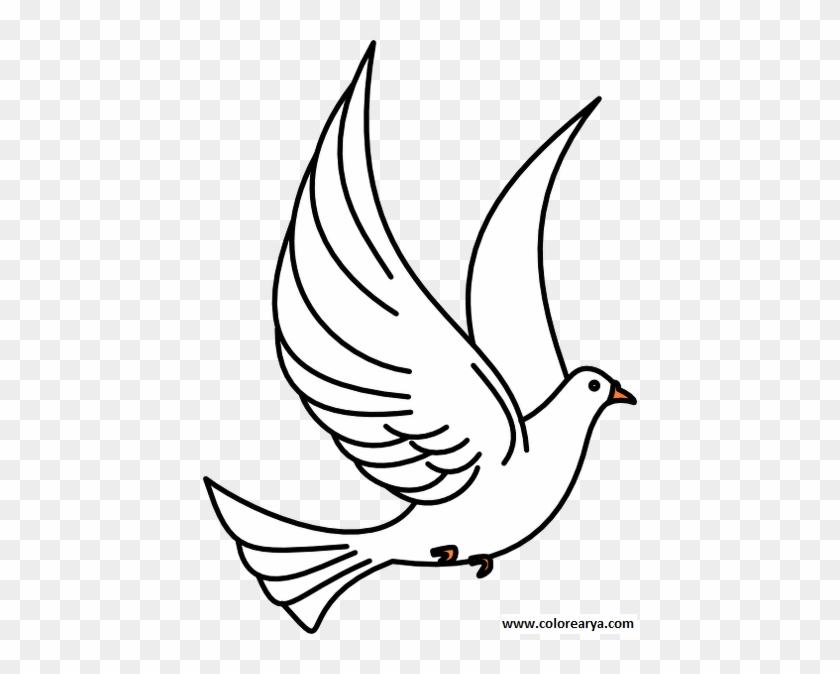 Ucan Kus Resmi Boyama Drawing Of Pigeon Flying Free