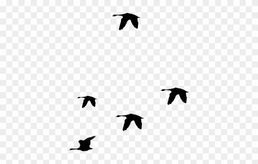 Flying Bird Clip Art Png - Stock #334357