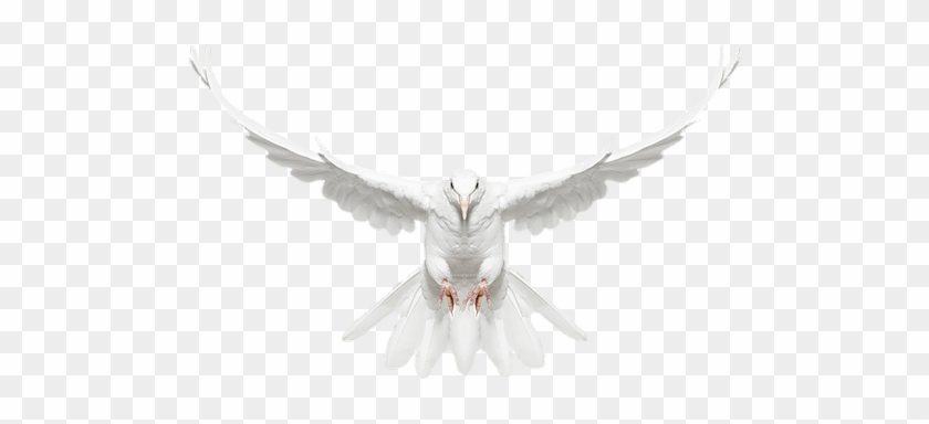 Drawings Of Doves In Flight Dove Bird Fly Png Free Transparent
