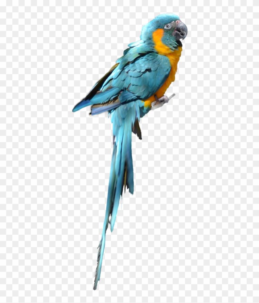 Download Parrot Png Transparent Images Transparent - Blue