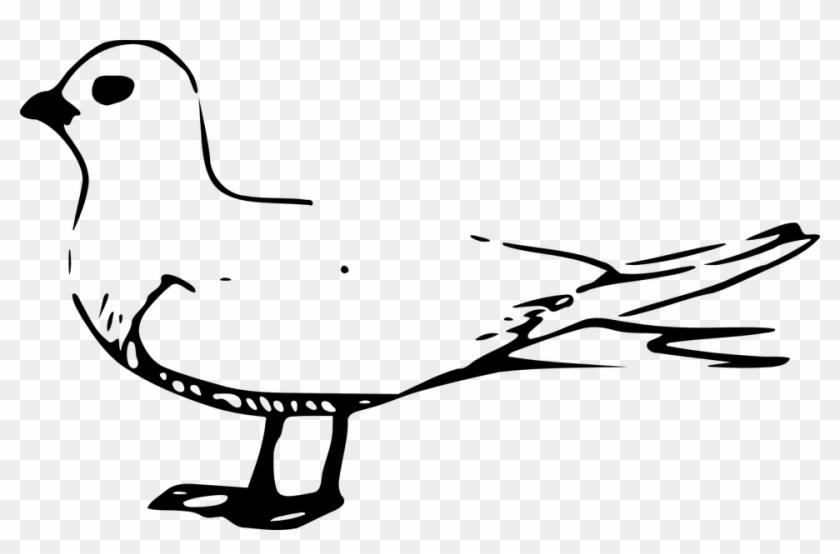 Seagull Cliparts 23, Buy Clip Art - Fairy Tern #341000