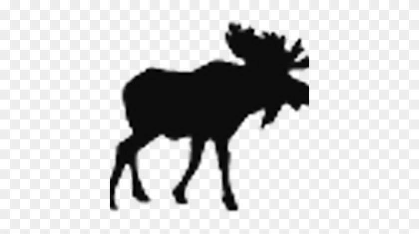 Moose Fm - Moose Fm #342197