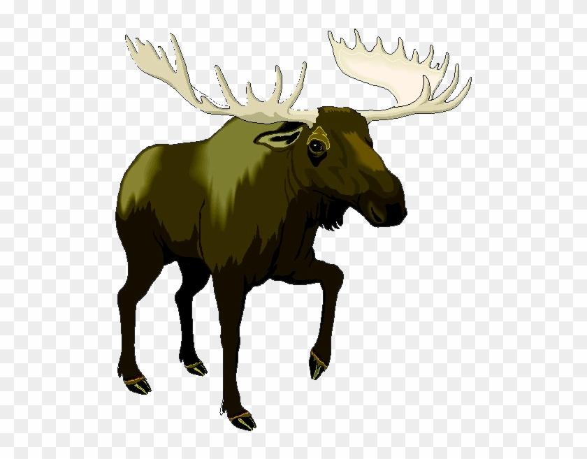 Alaskan Moose Clip Art