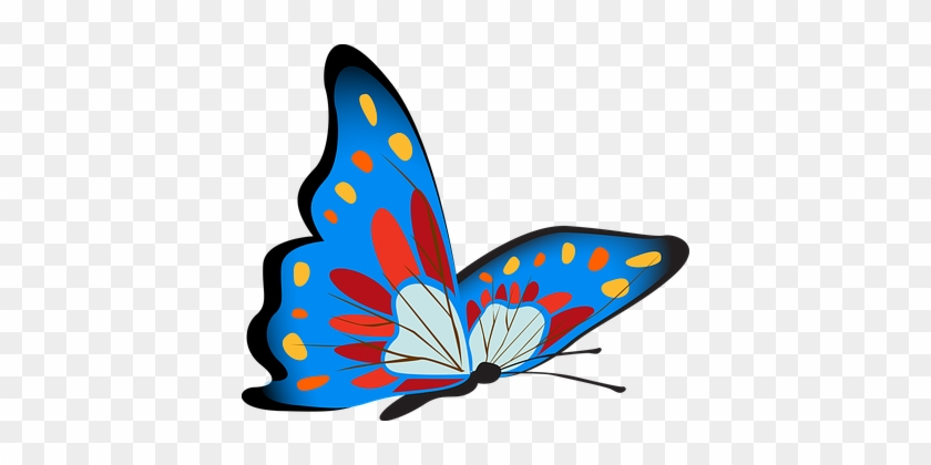 Butterfly, Colorful, Blue, Insect - Butterfly Colorful #342530