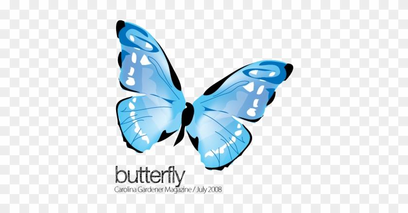 Swallowtail Butterfly #342666