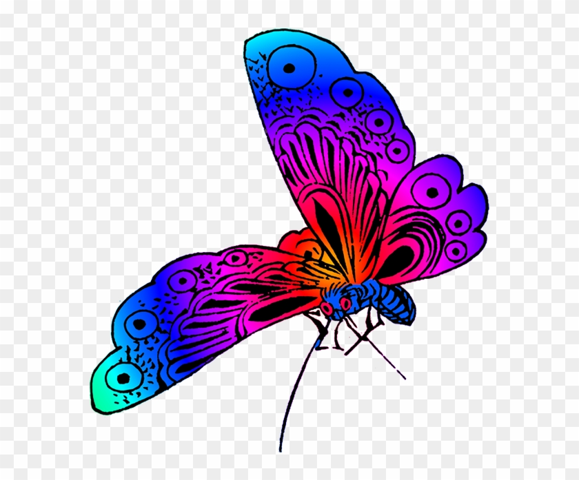 Beautiful Butterfly Image - Beautiful Butterfly Clipart #342687