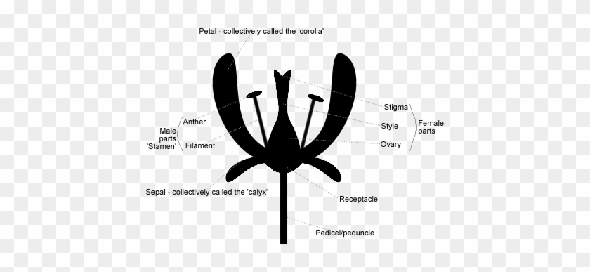 Parts Of A Flower - Dragonflies And Damseflies #342747