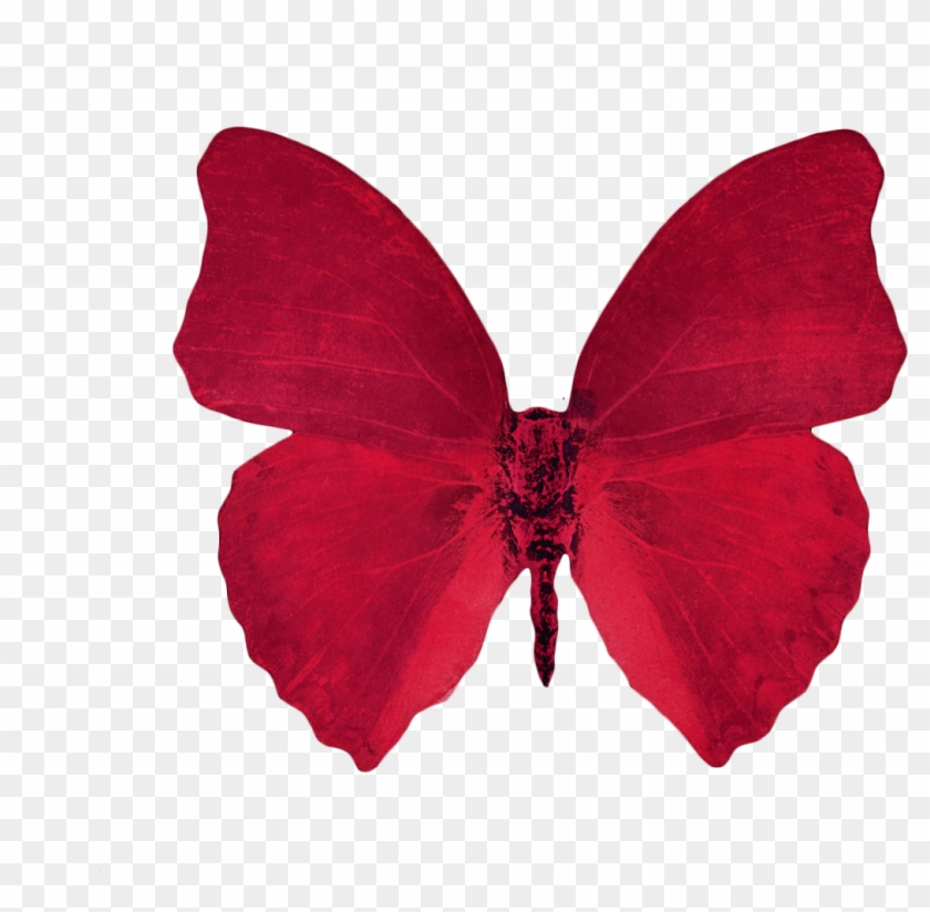 Butterfly Clipart Transparent Background Red Aesthetic