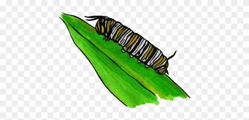 Caterpillar - Life Cycle Of A Butterfly Egg Clipart #343087