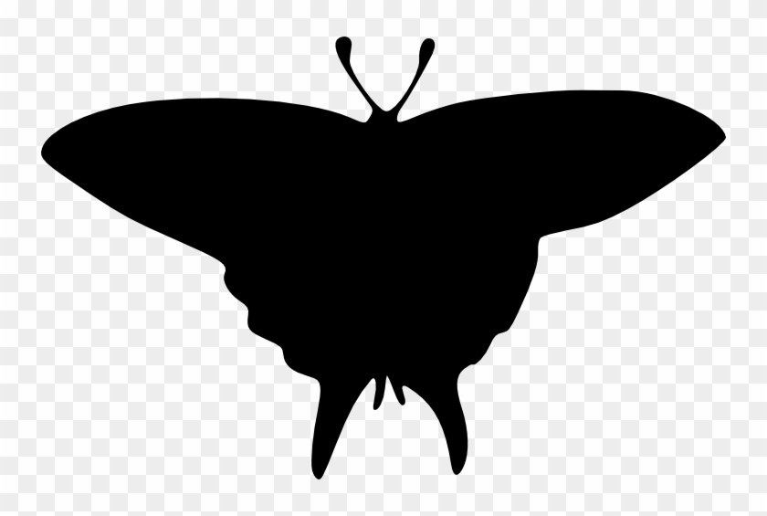 Free Download - Swallowtail Butterfly #343921