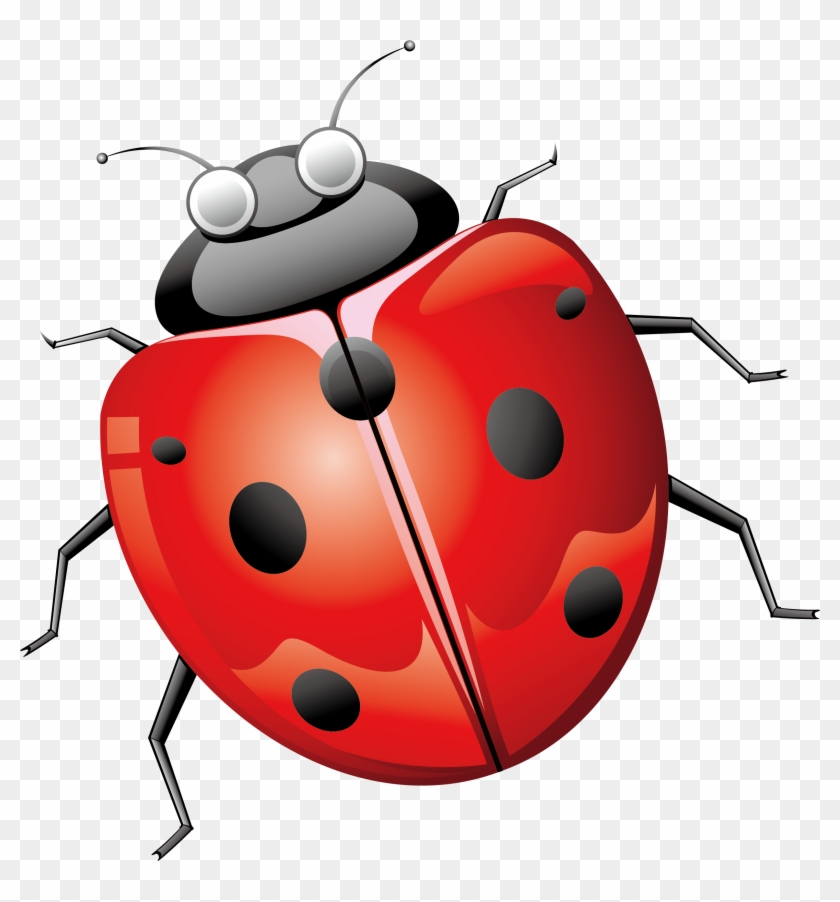 Ladybird Beetle Euclidean Vector - Lady Bug Png #344297