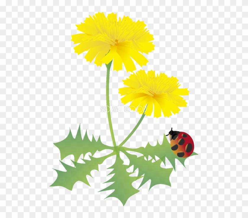 たんぽぽの花とてんとう虫の無料イラスト 春35月63537 春の 花