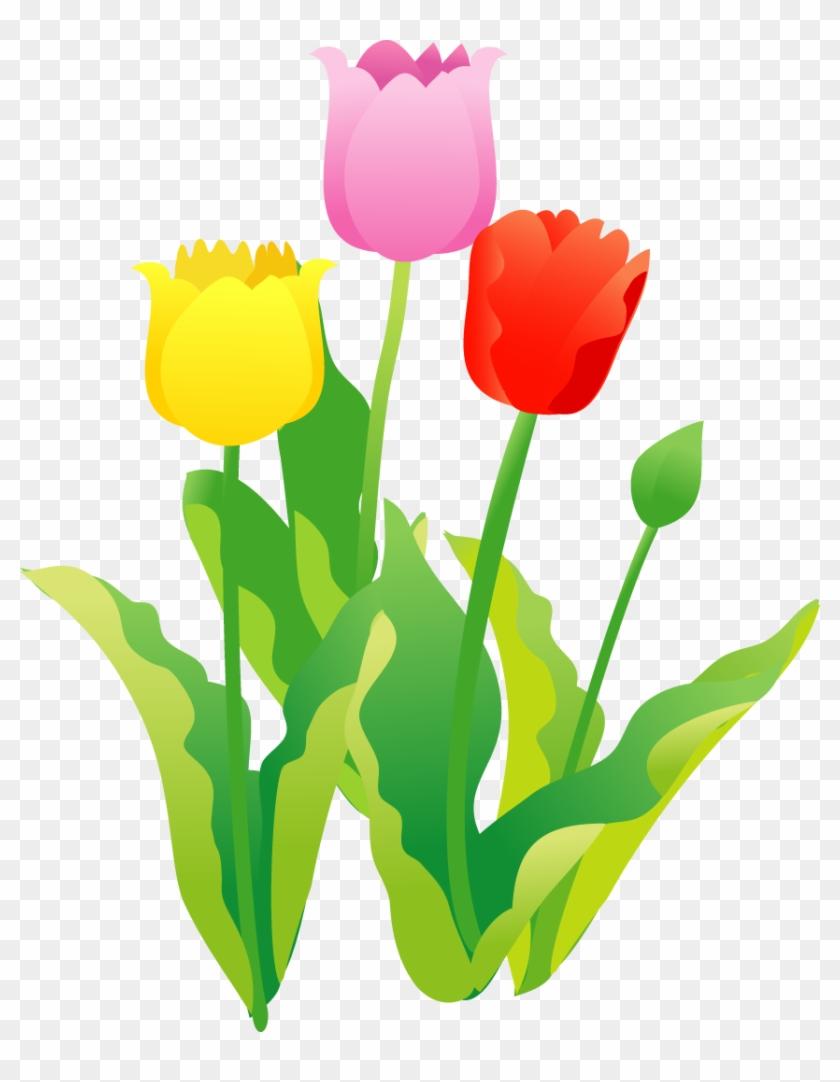 チューリップのイラスト・印刷用画像 - 春の 花 イラスト フリー - free
