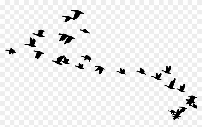 Flying Crow Silhouette Png - Bird Clipart Migrating #349362