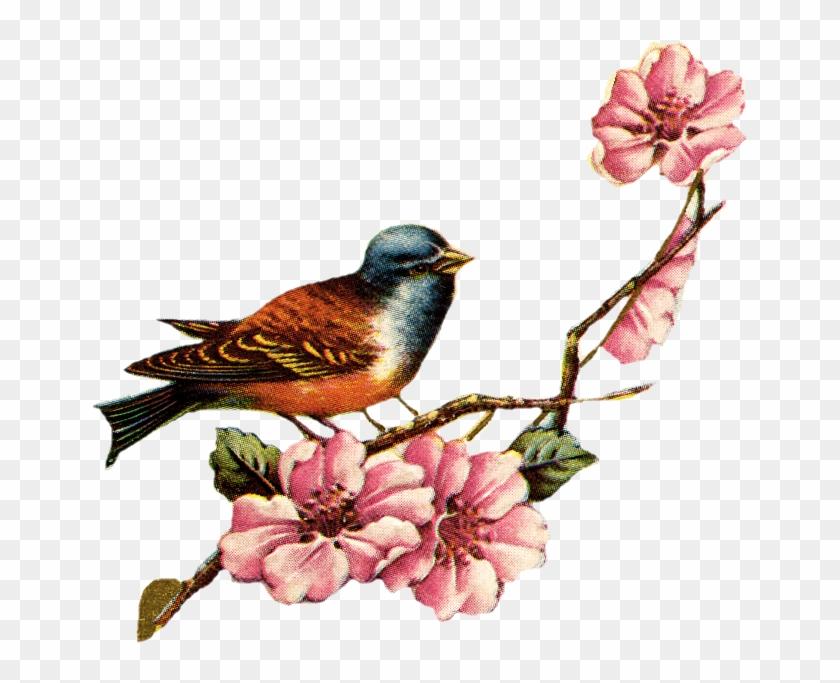 Drawn Lovebird Vintage Floral - Love Bird Vintage Png #349899