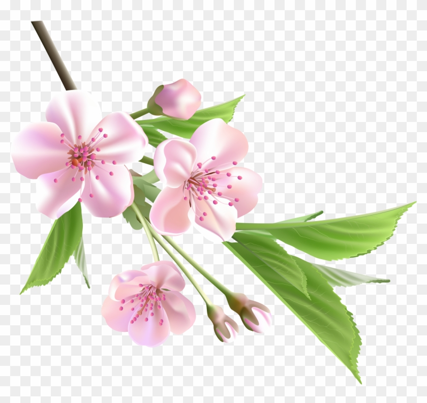 Flowering Branch Cliparts - Spring Flower Png #350308