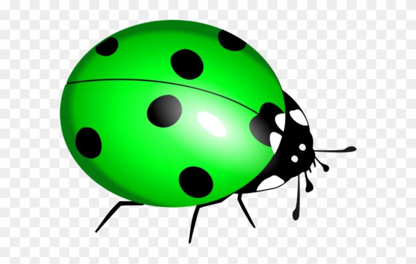 Cartoon Ladybug Clipart - Lady Bug Clip Art - Free Transparent PNG Clipart  Images Download