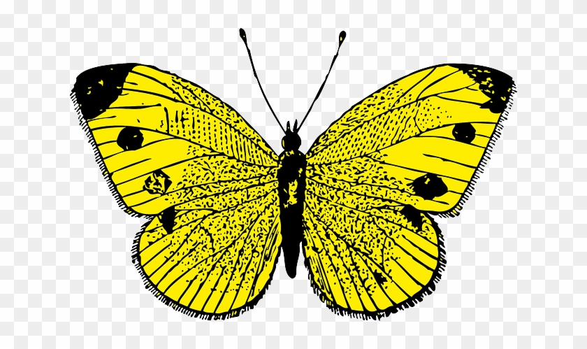 Yellow Butterfly Clip Art At Clker Com Vector Clip - Butterfly Yellow #354842