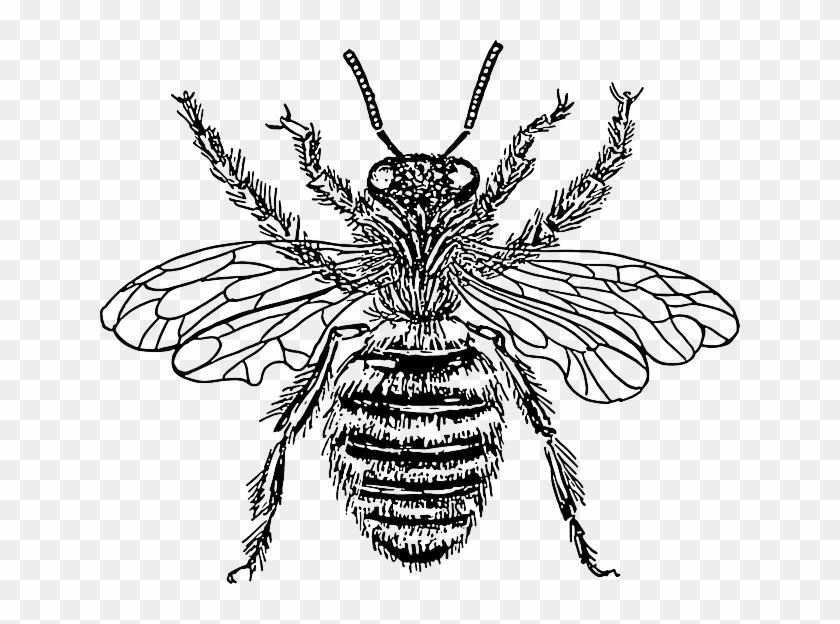 Honey Queen Cartoon Bee Wasp Illustration Insect Queen Honey