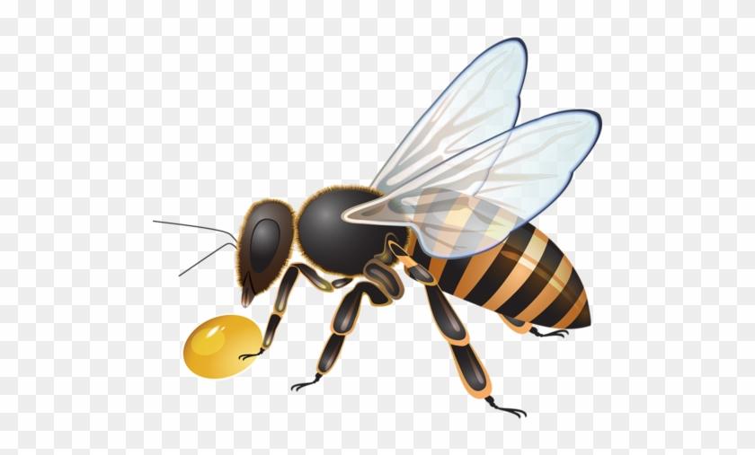 пчела в пнг на прозрачном фоне хотите пушистые сапожки