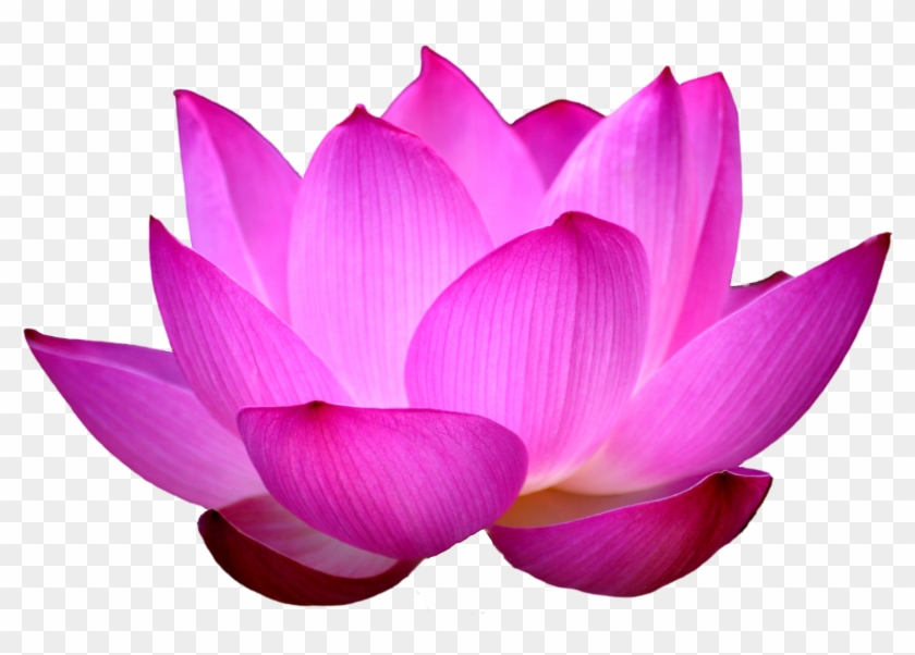 Clipart Images For Lotus Black White Lotus Flower Png Free