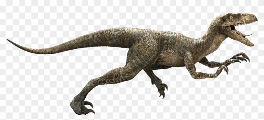 Which Jurassic World Dinosaur Are You - Jurassic Park Velociraptor #359037