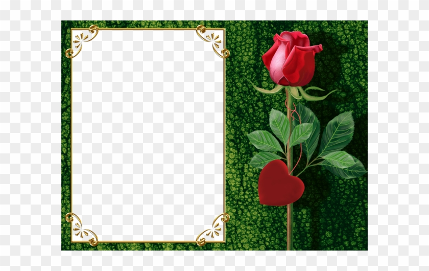 Transparent Green Png Photo Frame With Rose And Heart Beautiful