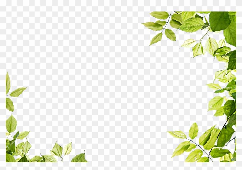 Leaf Frame Transparent Png - Leaf Frame #360086
