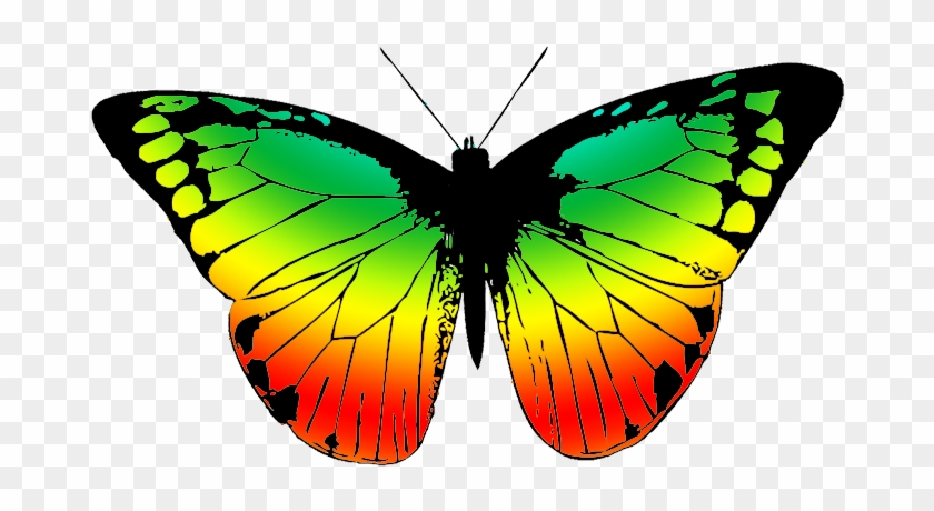Butterfly With Many Colors - Butterfly Wing Black And White #363063
