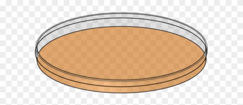 Petri Dish Clip Art - Petri Dish With Media #367155