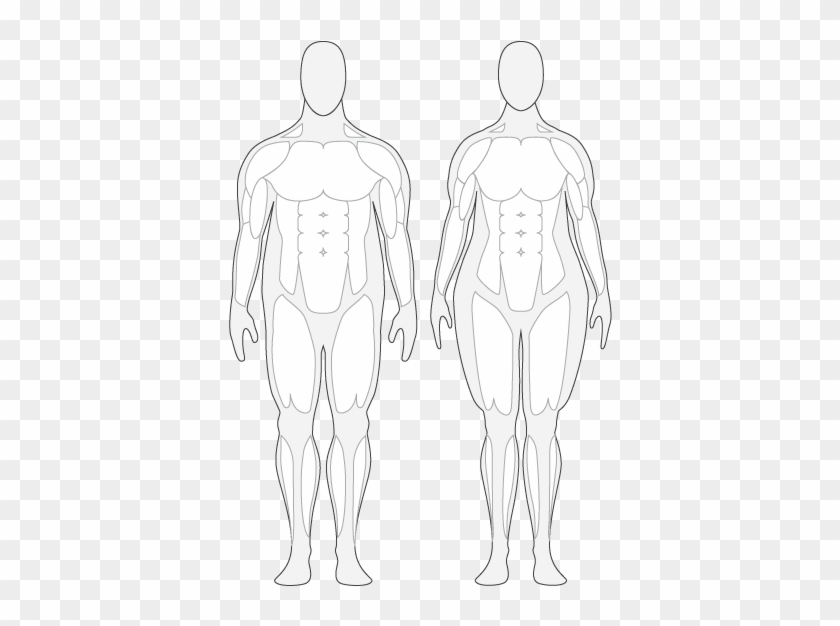 Outline Of Female Body - Human Body Muscle Outline #371151