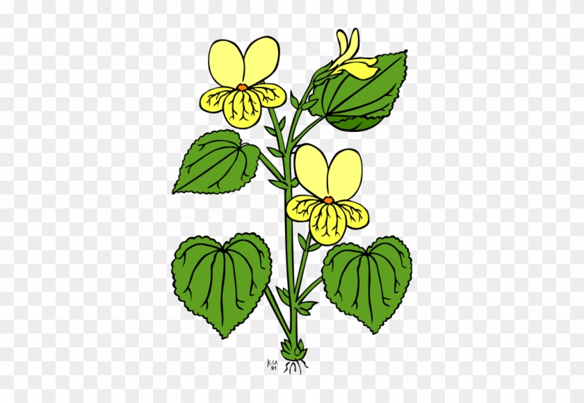 Org/en/free Clipart/viola - Plant With Leaves And Flowers #378933