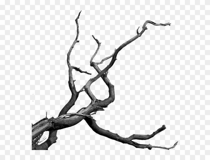 Photomanipulation By Sebastain - Dead Tree Branches Png #382265