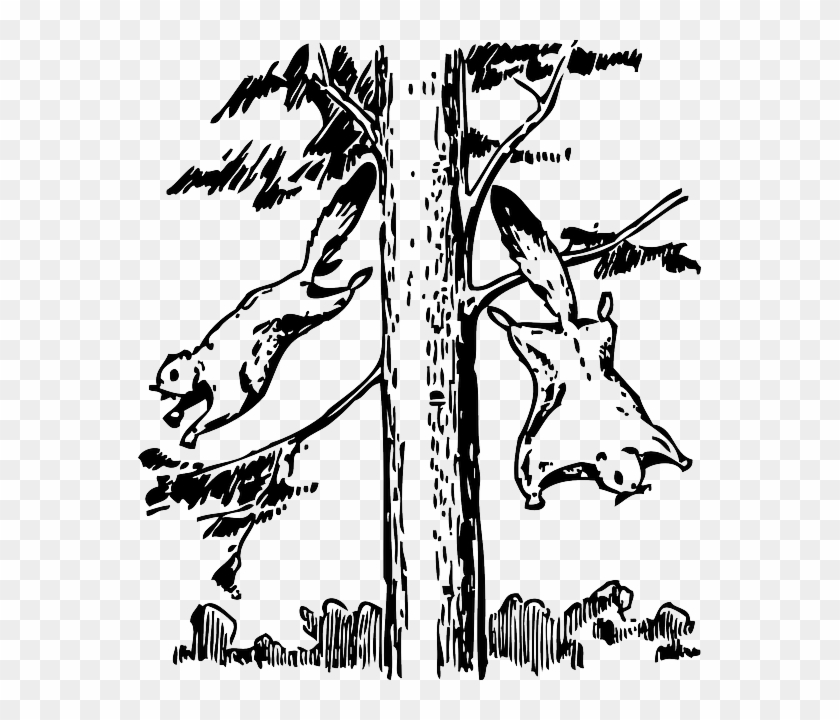 Squirrel Animals, Outline, Tree, Cartoon, Flying, Squirrel - Flying Squirrel Coloring Page #382568