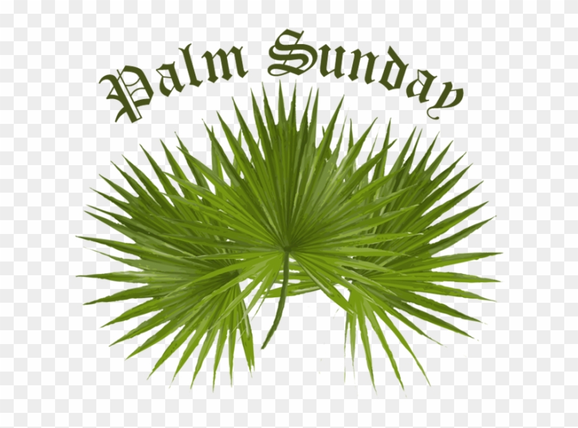 Palm Sunday Clip Art - Paul 16-old Gray 4 Magnets #382593
