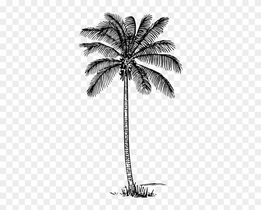 Coconut Tree Clipart Kid Coconut Tree Line Drawing Free