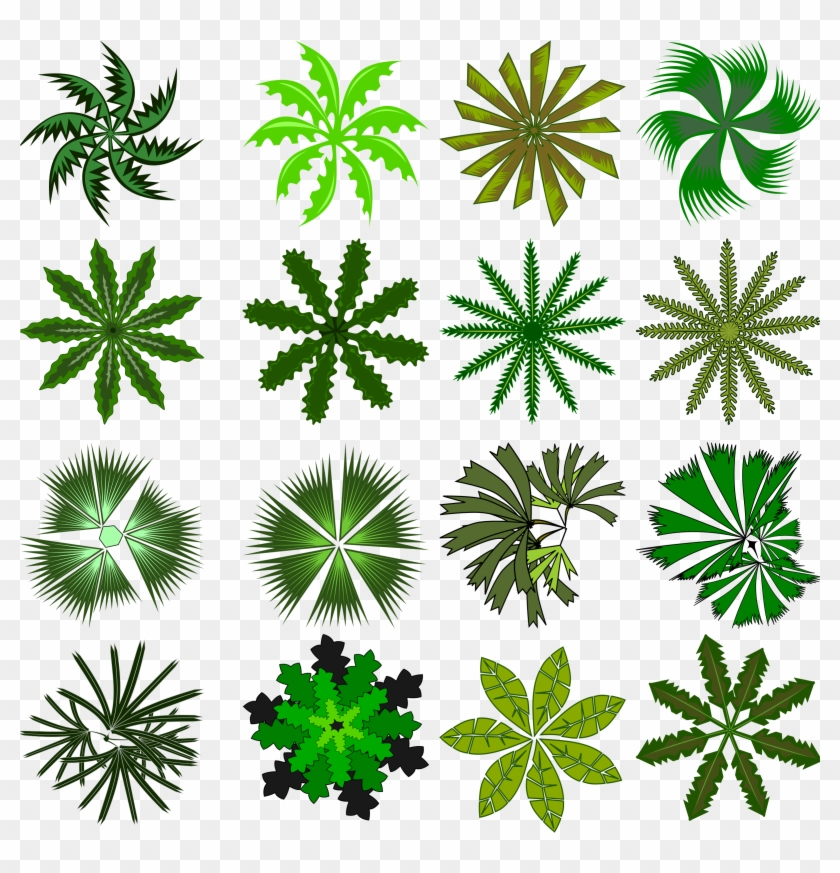 Cp Paurb Texture Palm Big Png With Alpha Trees Lugher - Palm Top View #382705